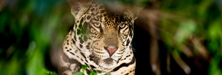Pantanal Wildlife Safari
